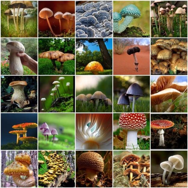 mushroom-mosaic