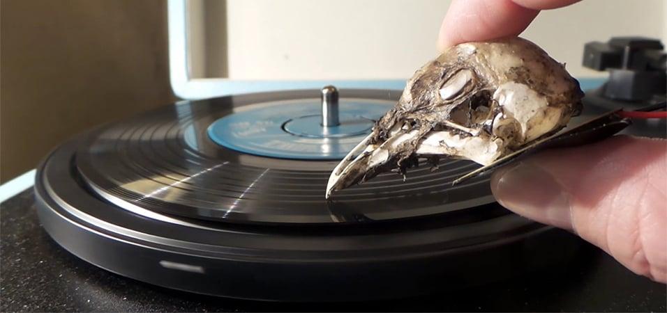 seagull-skull-vinyl-needle