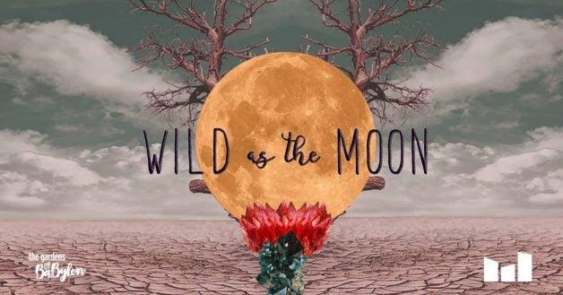 wild-moon-tgob-three