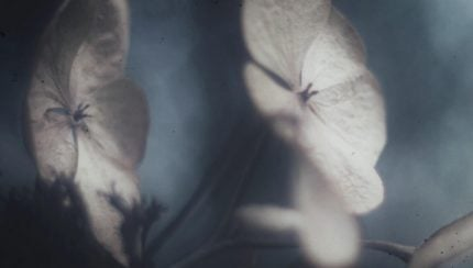 fryhide-groj